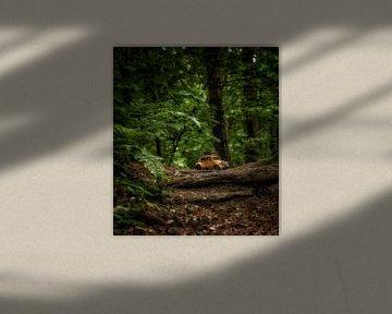Riesenwälder 1