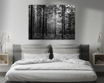 Rechte bomen in bos zwart wit van Charlotte Dirkse