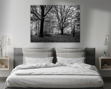 Große Bäume im Wald von Charlotte Dirkse