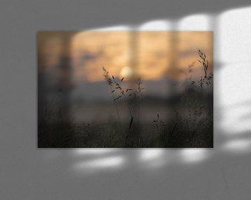 graan in de ochtendzon van Tania Perneel
