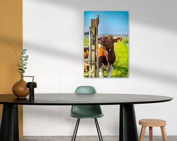 Koeien van Richard Nell