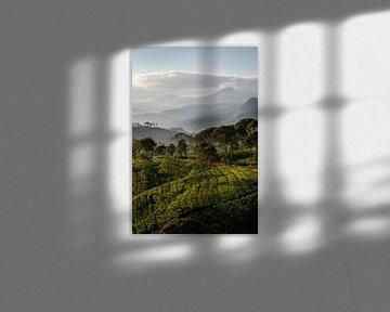 Zonsopkomst over een thee plantage van Ellis Peeters