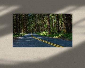 Een weg naar het Hoh-regenwoud in Olympic Nationaal Park van Henk Meijer Photography