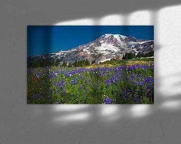 Blühende Lupinen am Mount Ranier, Bundesstaat Washington von Henk Meijer Photography