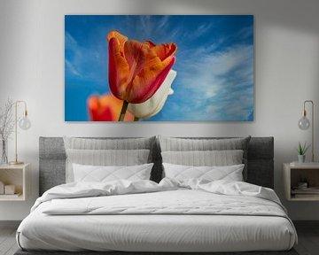Oranje Tulp van Ed Steenhoek