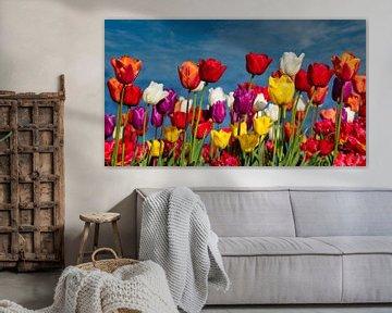 Blühende Tulpen von Ed Steenhoek