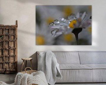 Gänseblümchen mit Reflexion von Eveline De Brabandere