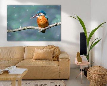 Eisvogel in Blau von Foto Amsterdam / Peter Bartelings