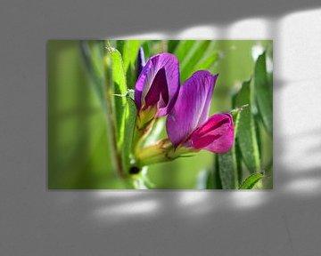 Ein Makro aus einigen kleinen Blüten von Gerard de Zwaan