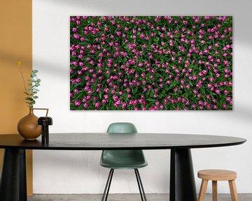 Rosa Tulpen von jody ferron