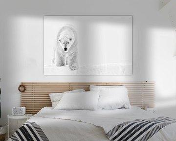 Eisbär im Schnee. von Tilly Meijer