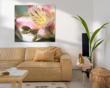 Blumenstampfer von Eveline De Brabandere