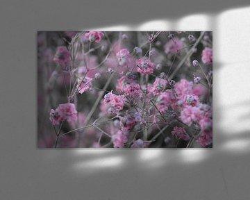 rosa Blumen von Eveline De Brabandere