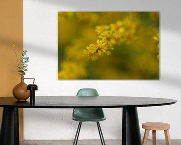 gelbe Blumen von Eveline De Brabandere