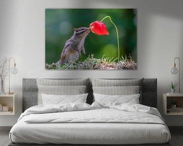 Eekhoorn ruikt aan bloem van Albert Beukhof