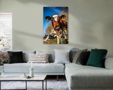 Kühe von Richard Nell