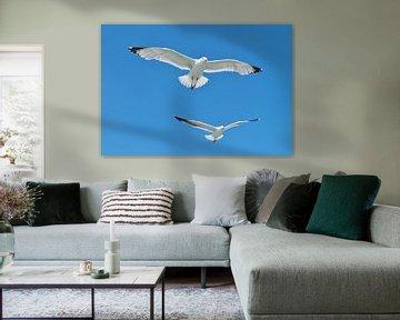 Flight of the Seagulls van Femke Vergeer