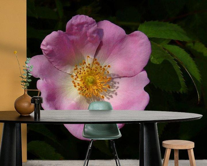 Sfeerimpressie behang: Beauty of a Rose... (Wilde roze Roos) van Caroline Lichthart