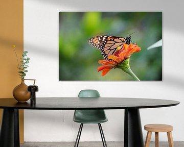 Papillon 1 sur Frank Smetsers