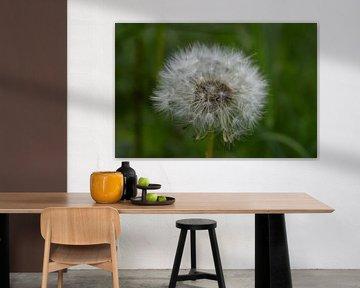 Pferdeblumen-Flaum von Breezy Photography and Design