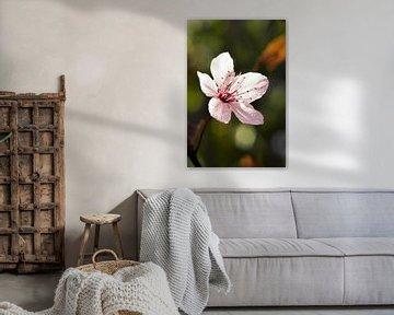 Rosa Frühlingsblüte von Jasmijn Otten