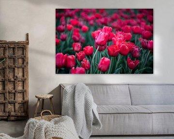 Rote Tulpen von Richard Lubbers