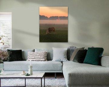 Pony in der Natur von Mirac Karacam
