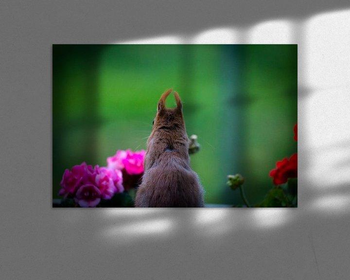Impression: Ecureuil derrière le géranium. sur Anneke Hooijer