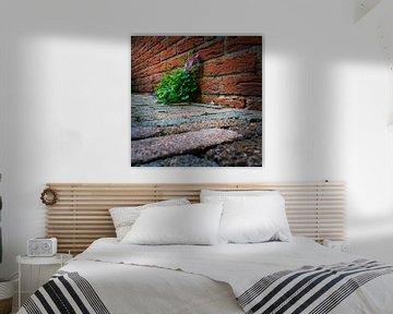 Mauerblümchen von Peter van Nugteren