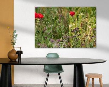 Eine Hummel bei der Arbeit im Blumenfeld von J..M de Jong-Jansen