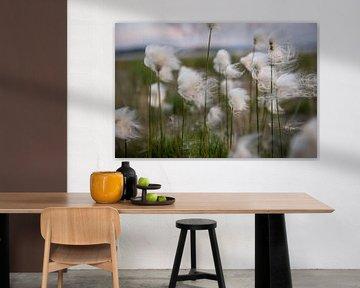Fluffy flower - veenpluis van Ellis Peeters
