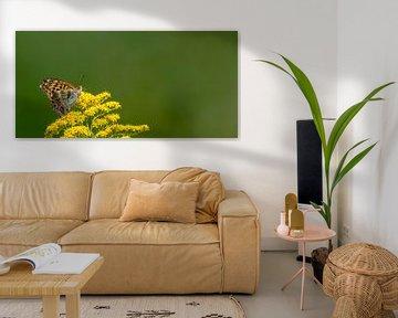 Schmetterling auf gelber Blüte von Hans-Jürgen Janda