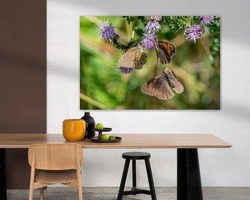 Drei Schmetterlinge von Hans-Jürgen Janda
