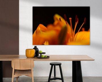 Oranje potlelies van Michael Fousert
