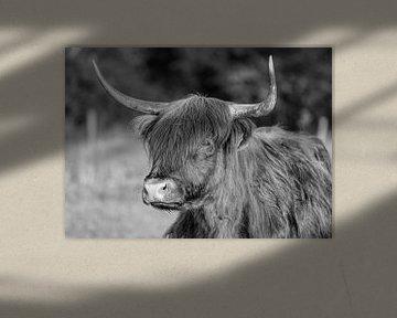 Schotse Hooglander Portret Zwart Wit van Charlene van Koesveld