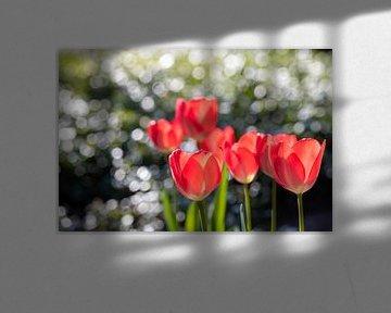 Rote Tulpen mit Bokeh von Tropfen auf grünen Blättern von Tonko Oosterink