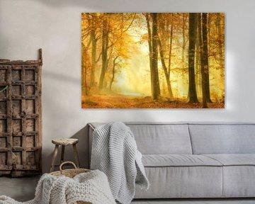 Pad door een nevel bos tijdens een mooie mistige herfstdag van Sjoerd van der Wal