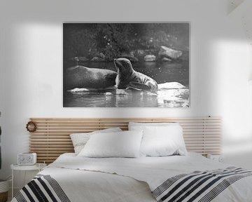 Südamerikanischer Seebär genießt den Sonnenschein von Maria-Maaike Dijkstra