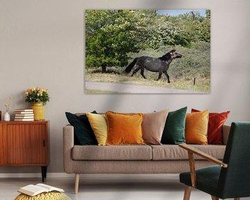 Wildpferde von Anneke Antonides