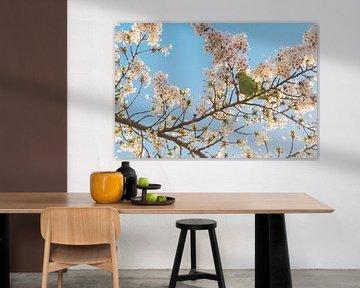 Perruche à collier et arbre à fleurs