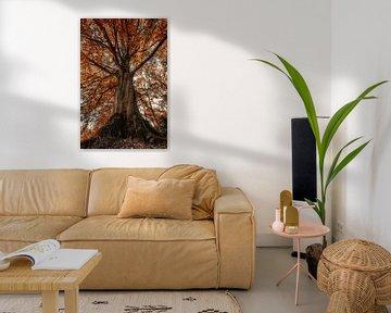 Tree van Angelique Spanjaard-Oomen