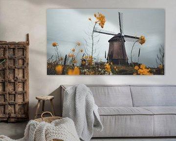 Niederländische Mühlen von Delano Balten