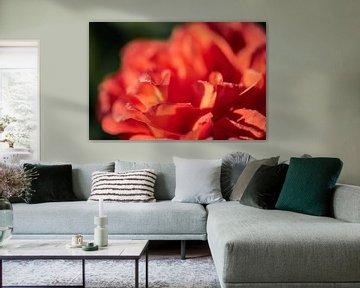 Orangenblütenblätter von Tania Perneel