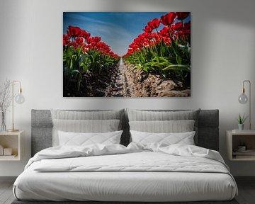 Tulipfield von Anita Kabbedijk