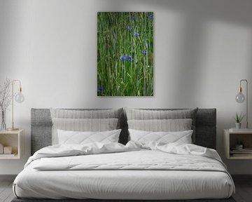 Krnblumen von Thomas Jäger