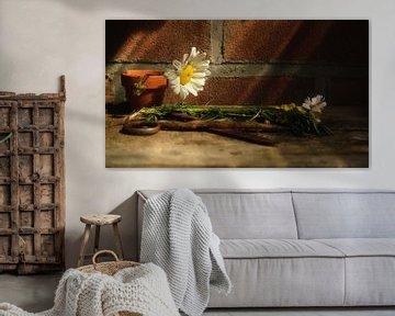 Blumenkunst von Johannes Schotanus