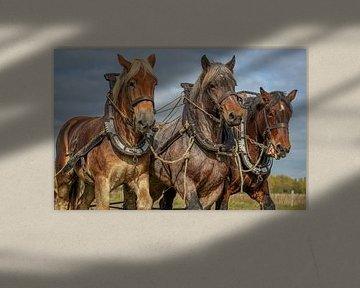 paarden van Lisette van Peenen