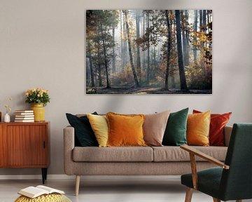 Colourfall. van Inge Bovens