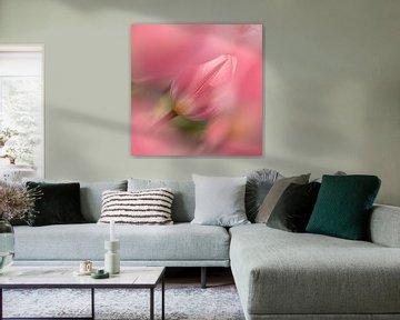 Leichte und verträumte Tulpe Tulipa von Rina Bredie