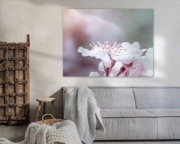 Weiß-rosa Blütenblüte in Nahaufnahme Makro von Art By Dominic